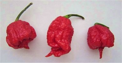 1 Kilogram or 2.2 Pounds Dried Carolina Reaper Pods